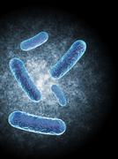 Bascillus Bacteria Stock Illustration
