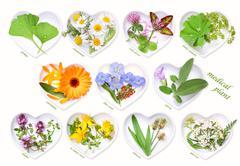 Alternative Medicine with medicinal plants  Stock Photos