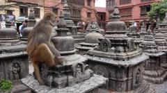 A monkey hanging out on ruins at Monkey Temple in Kathmandu Stock Footage