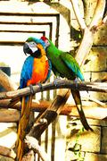 Colorful couple parrots sitting Stock Photos