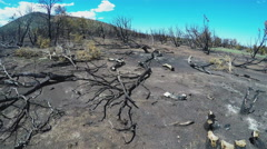 Walking Past Charred Tree Devastation After Forest Fire- Williams AZ Stock Footage