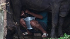 A poor farmer milks a water Buffalo. Stock Footage