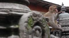 A monkey hangs out at Monkey Temple in Kathmandu, Nepal Stock Footage