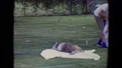 1961: making a bed can prove to be difficult with the wrong animals TOLEDO, OHIO Stock Footage