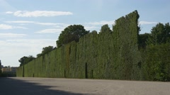 High green hedge from tree foliage in park Arkistovideo