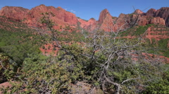 Kolob Canyons Zion National Park Stock Footage
