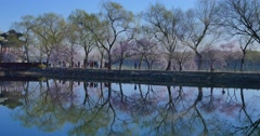 Spring  in Summer Palace Stock Footage