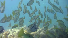 Scuba Diver POV over gorgeous corals and Red Sea FISH. Stock Footage