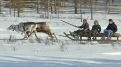 People ride on a sleigh pulled by reindeer. Stock Footage