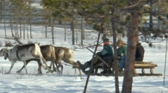 Three people riding on a reindeer sleigh. Stock Footage