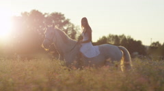 CLOSE UP: Girl in white dress riding horse in flowering pink field at sunset Stock Footage