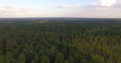 Aerial view nature cedars taiga 1 Stock Footage