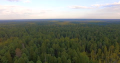 Aerial view nature cedars Stock Footage