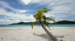 Panning video of palm tree on Sandy Spit, British Virgin Islands  Stock Footage