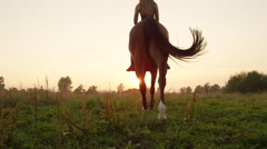 LOW ANGLE VIEW: Beautiful brown horse with rider walking into golden sunrise Stock Footage