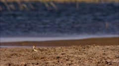 Juyan Lake Basin's bird Stock Footage