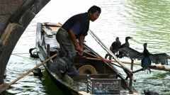 WUZHEN, CHINA man handling fishing cormorants Stock Footage