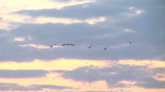 Zoom-out of a flock of birds flying over Kampala, Uganda. Stock Footage