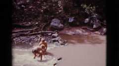 1968: two little boys playing and splashing in the water and finding rocks Stock Footage