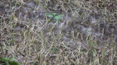Heavy Rain Makes Water Inundated On Dry Grass Footage Stock Footage