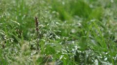 Beautiful field grass, close up macro shot, raindrops falling, raw flat footage Stock Footage