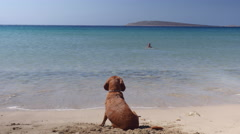 Cute little dog relaxing at beach. Stock Footage