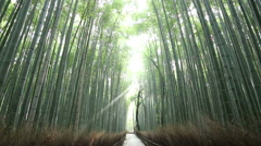 Converging Trees Sunbeam Looking Up Arashiyama Bamboo Forest Kyoto HD 30fps Stock Footage