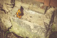 Orange Butterfly on Concrete Stock Photos