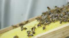 4K Extreme close up of honeybees working together on a honeycomb Stock Footage