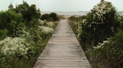 White flowers surround wooden path to beach Stock Footage