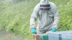 4K Bee keeper lifting out honeycomb from the hive to take a look Stock Footage