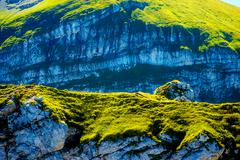 Beautiful details of alpine mountain landscape on bright summer day Stock Photos