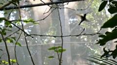 Hummingbird flies from branch Stock Footage