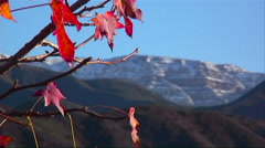 The sparse orange leaves of a tree rustle slightly in the breeze. Stock Footage