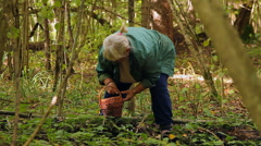 An elderly woman gathers mushrooms in the forest Stock Footage
