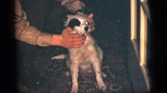 1956: family fun afternoon party during the dog days of summer NEW YORK CITY Stock Footage