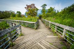 Boardwalk trail in a wetland, at Rivergate City Park, in Alexandria, Virginia Stock Photos