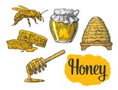 Honey set. Jars of honey, bee, hive, clover and honeycomb. Vector vintage eng Stock Illustration