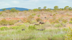 Rolling South African Hills with Elephants Stock Footage