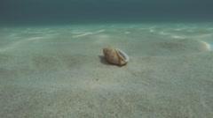 Mediterranean Hermit Crab Dardanus Arrosor Stock Footage