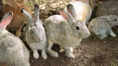 Many rabbits sitting together Stock Footage