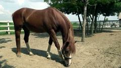 Horse in Farm Ranch in the Vojvodina Stock Footage