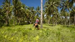 Cowboy man riding horse around palm tree Stock Footage