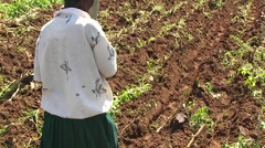 A group of people are planting seeds in a field. Stock Footage
