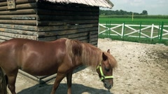 Horse in ranch eating  in the Vojvodina Stock Footage