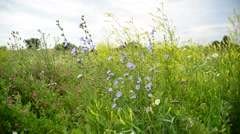Blooming meadow in central part of Russia Stock Footage