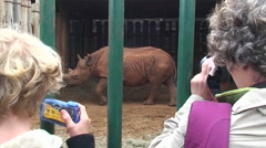 Two women take pictures of a rhinoceros walking around in a cage. Stock Footage