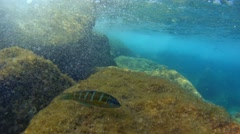 Some fishes swimming around and bubbles from waves (4k) Stock Footage
