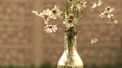 A bouquet of flowers in a glass vase. Stock Footage