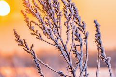Winter plant hoarfrost Stock Photos